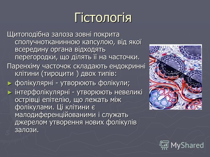 Гістологія Щитоподібна залоза зовні покрита сполучнотканинною капсулою, від якої всередину органа відходять перегородки, що ділять її на часточки. Паренхіму часточок складають ендокринні клітини (тироцити ) двох типів: фолікулярні - утворюють фолікул