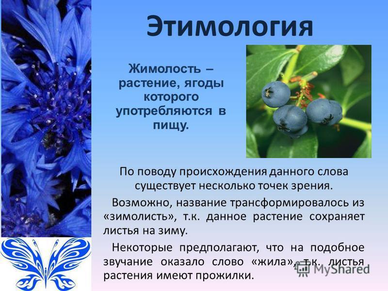 Этимология По поводу происхождения данного слова существует несколько точек зрения. Возможно, название трансформировалось из «зимолисть», т.к. данное растение сохраняет листья на зиму. Некоторые предполагают, что на подобное звучание оказало слово «ж