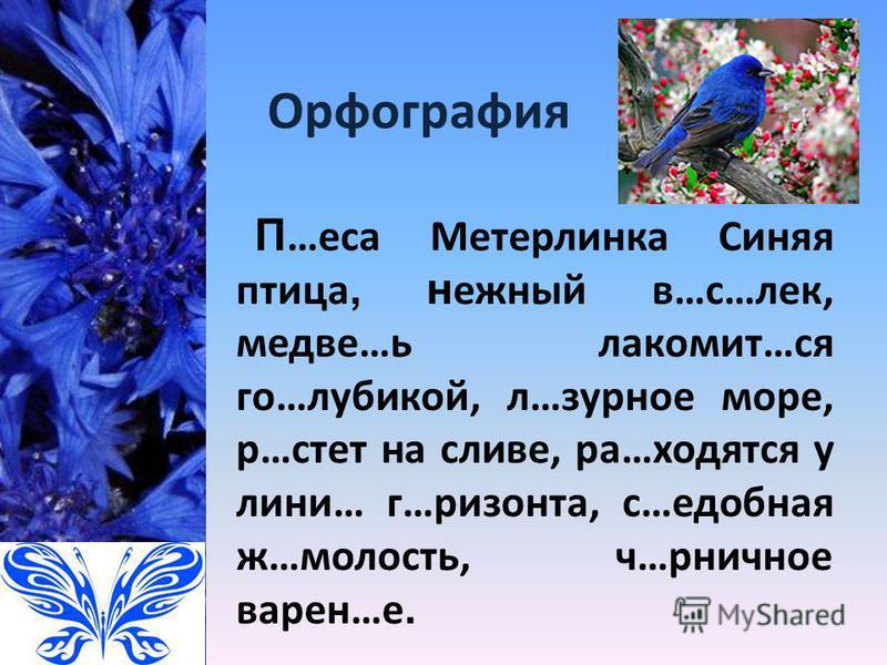 Орфография П …еса Метерлинка Синяя птица, нежный в…с…лек, медведь…ь лакомит…ся го…лубикой, л…бурное море, р…счет на сливе, ра…сходятся у лини… г…ризонта, с…удобная ж…малость, ч…рничное варен…е.