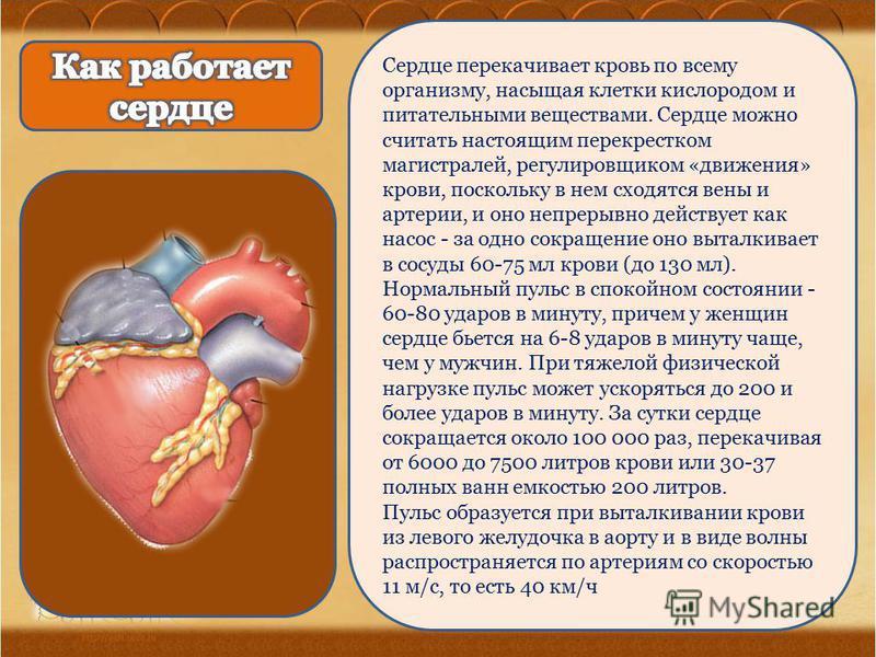 Сердце перекачиваяет кровь по всему организму, насыщая клетки кислородом и питательными веществами. Сердце можно считать настоящим перекрестком магистралей, регулировщиком «движения» крови, поскольку в нем сходятся вены и артерии, и оно непрерывно де