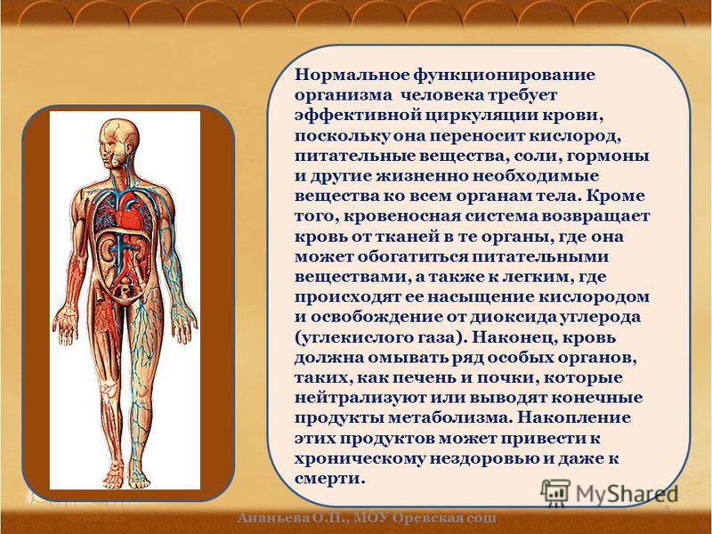 Нормальное функционирование организма человека требует эффективной циркуляции крови, поскольку она переносит кислород, питательные вещества, соли, гормоны и другие жизненно необходимые вещества ко всем органам тела. Кроме того, кровеносная система во