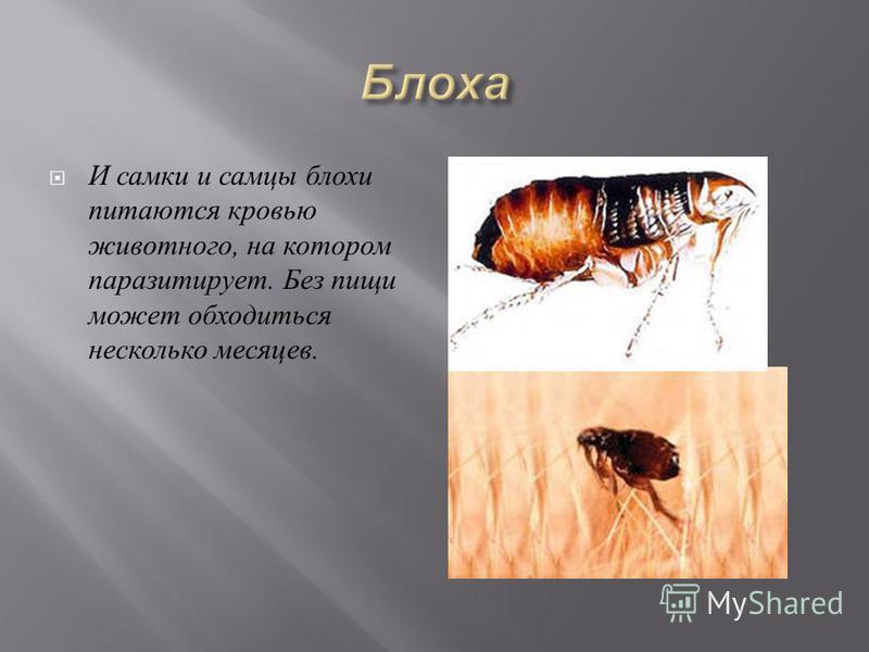 Клещи пьют кровь у всех живых существ и вызывают болезни у человека и домашних животных, а также передают через укусы заболевания, повреждающие культурные растения.