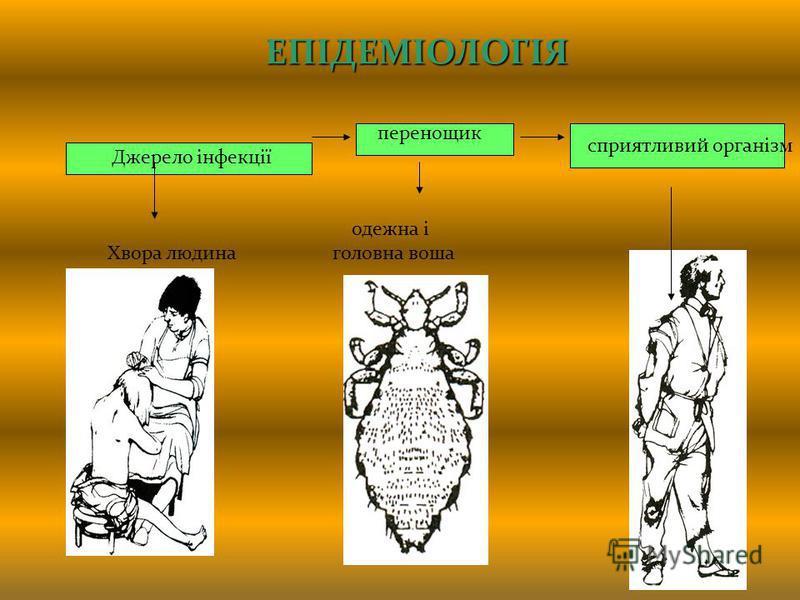 сприятливий організм ЕПІДЕМІОЛОГІЯ перенощик Джерело інфекції одежна і Хвора людина головна воша