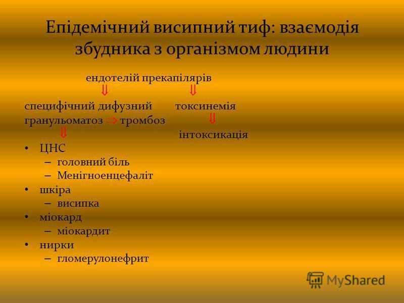 Епідемічний висипний тиф: взаємодія збудника з організмом людини ендотелій прекапілярів специфічний дифузний токсинемія гранульоматоз тромбоз інтоксикація ЦНС – головний біль – Менігноенцефаліт шкіра – висипка міокард – міокардит нирки – гломерулонеф