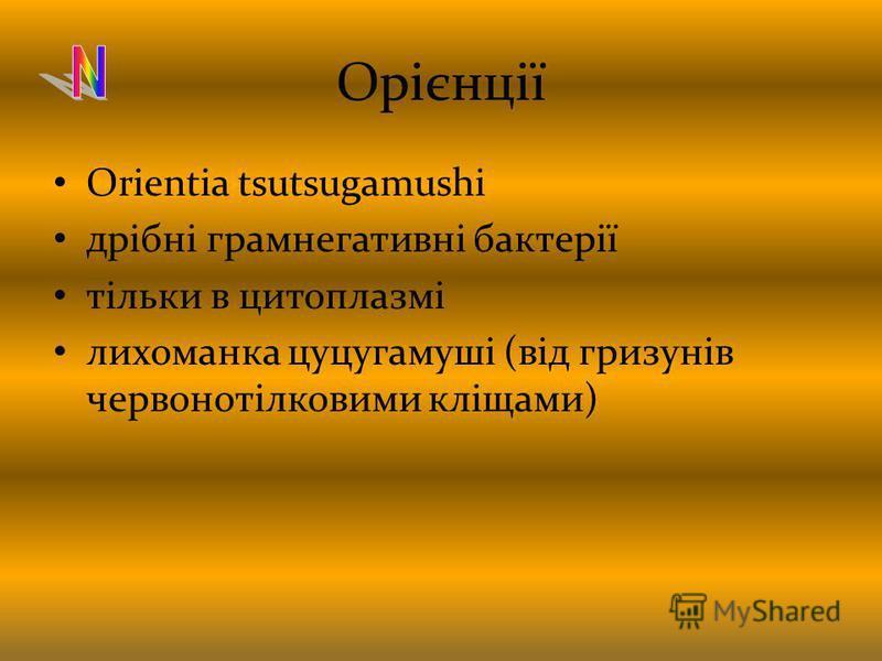 Орієнції Orientia tsutsugamushi дрібні грамнегативні бактерії тільки в цитоплазмі лихоманка цуцугамуші (від гризунів червонотілковими кліщами)