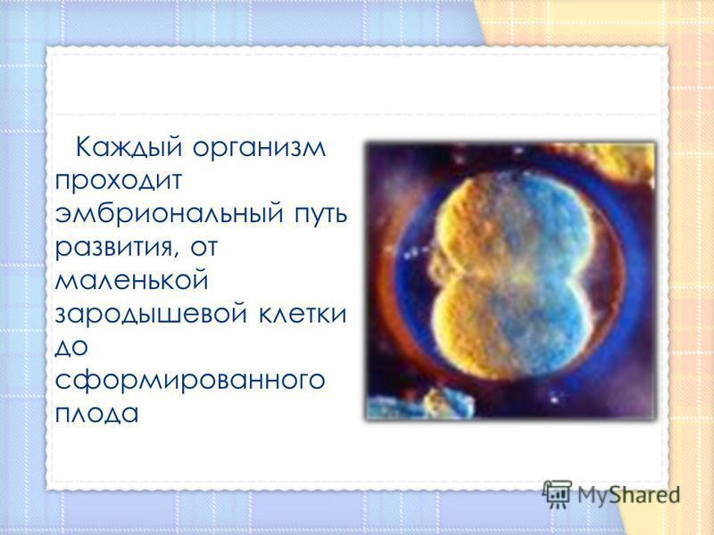 Каждый организм проходит эмбриональный путь развития, от маленькой зародышевой клетки до сформированого плода