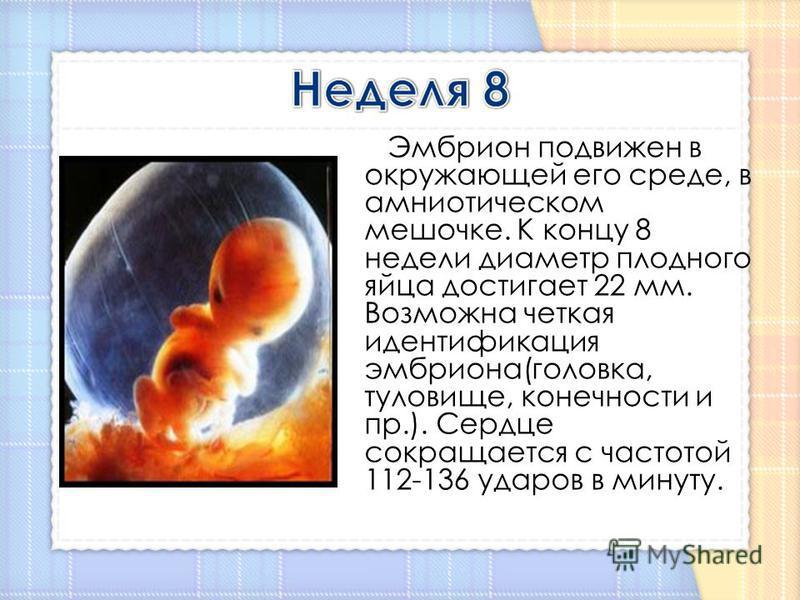 Эмбрион подвижен в окружающей его среде, в амниотическом мешочке. К концу 8 недели диаметр плодного яйца достигает 22 мм. Возможна четкая идентификация эмбриона(головка, туловище, конечности и пр.). Сердце сокращается с частотой 112-136 ударов в мину