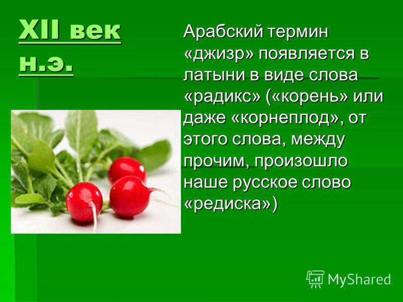XII век н.э. XII век н.э. Арабский термин «джизр» появляется в латыни в виде слова «радикс» («корень» или даже «корнеплод», от этого слова, между прочим, произошло наше русское слово «редиска»)