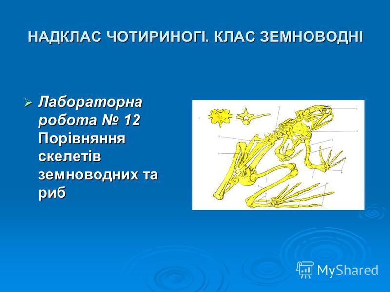 НАДКЛАС ЧОТИРИНОГІ. КЛАС ЗЕМНОВОДНІ Лабораторна робота 12 Порівняння скелетів земноводних та риб Лабораторна робота 12 Порівняння скелетів земноводних та риб