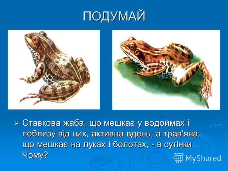 ПОДУМАЙ Ставкова жаба, що мешкає у водоймах і поблизу від них, активна вдень, а трав'яна, що мешкає на луках і болотах, - в сутінки. Чому? Ставкова жаба, що мешкає у водоймах і поблизу від них, активна вдень, а трав'яна, що мешкає на луках і болотах,