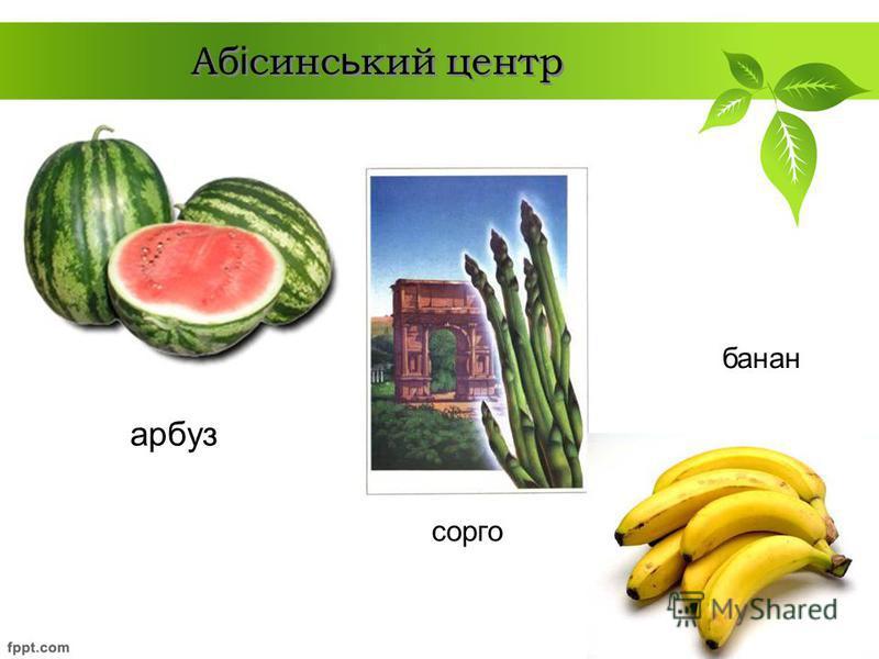арбуз Аб і синс ь кий центр сорго банан