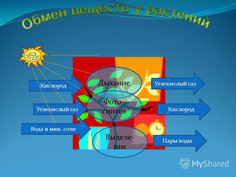 Углекислый газ Кислород Вода и мин. соли Углекислый газ Кислород Пары воды Дыхание Фото- синтез Выделе- ние