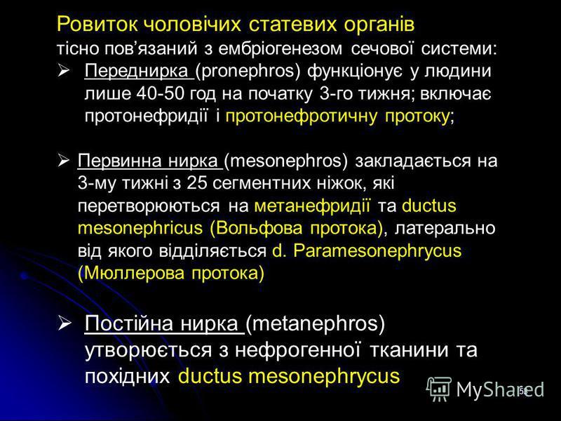 53 Ровиток чоловічих статевих органів тісно повязаний з ембріогенезом сечової системи: Переднирка (pronephros) функціонує у людини лише 40-50 год на початку 3-го тижня; включає протонефридії і протонефротичну протоку; Первинна нирка (mesonephros) зак