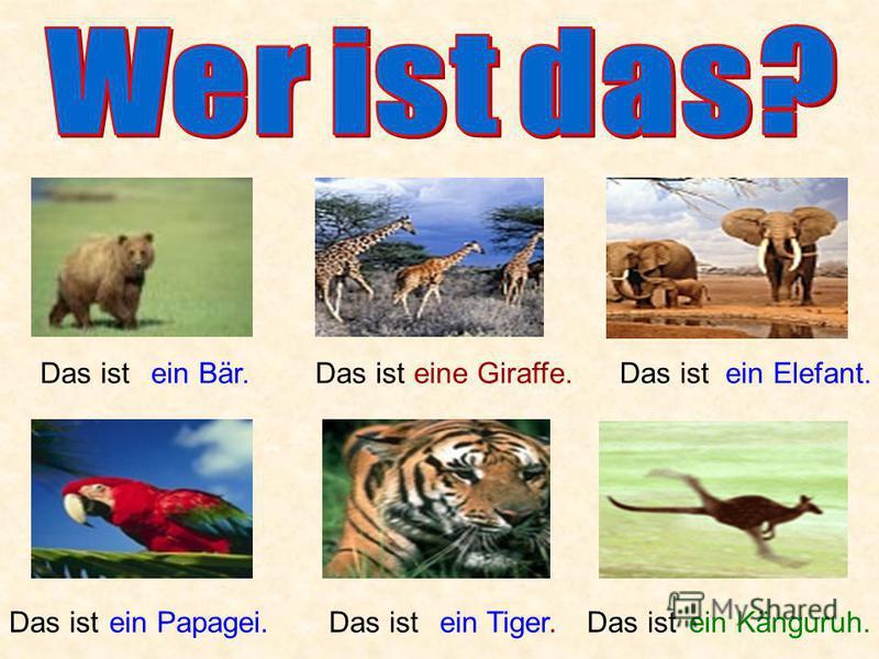 Das istein Bär.Das isteine Giraffe.Das istein Elefant. Das istein Papagei.Das istein Tiger.Das istein Känguruh.