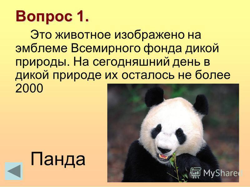 Вопрос 1. Это животное изображено на эмблеме Всемирного фонда дикой природы. На сегодняшний день в дикой природе их осталось не более 2000 Панда