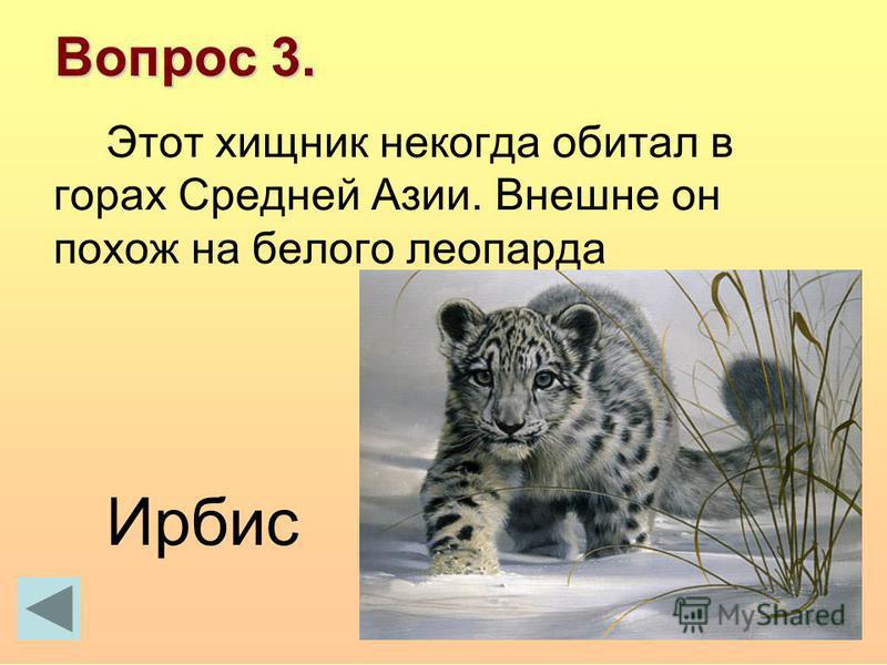 Вопрос 3. Этот хищник некогда обитал в горах Средней Азии. Внешне он похож на белого леопарда Ирбис