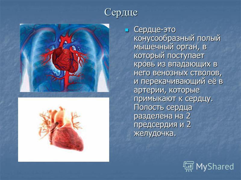 Сердце Сердце-это конусообразный полый мышечный орган, в который поступает кровь из впадающих в него венозных стволов, и перекачивающий её в артерии, которые примыкают к сердцу. Полость сердца разделена на 2 предсердия и 2 желудочка. Сердце-это конус