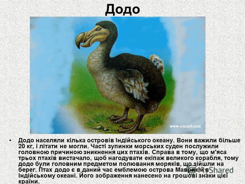 Додо Додо населяли кілька островів Індійського океану. Вони важили більше 20 кг, і літати не могли. Часті зупинки морських суден послужили головною причиною зникнення цих птахів. Справа в тому, що м'яса трьох птахів вистачало, щоб нагодувати екіпаж в