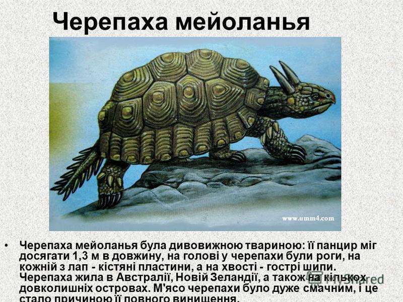 Черепаха мейоланья Черепаха мейоланья була дивовижною твариною: її панцир міг досягати 1,3 м в довжину, на голові у черепахи були роги, на кожній з лап - кістяні пластини, а на хвості - гострі шипи. Черепаха жила в Австралії, Новій Зеландії, а також