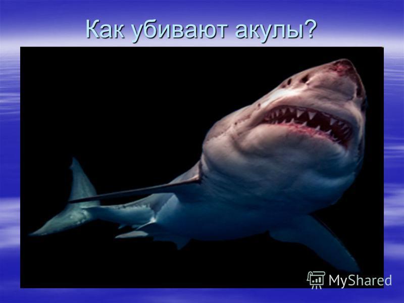 Как убивают акулы?