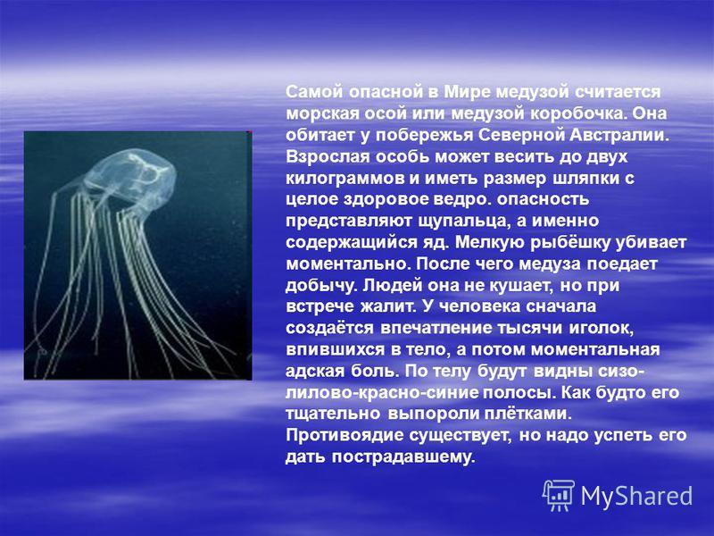 Самой опасной в Мире медузой считается морская осой или медузой коробочка. Она обитает у побережья Северной Австралии. Взрослая особь может весить до двух килограммов и иметь размер шляпки с целое здоровое ведро. опасность представляют щупальца, а им