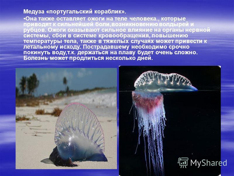Медуза «португальский кораблик». Она также оставляет ожоги на теле человека., которые приводят к сильнейшей боли,возникновению волдырей и рубцов. Ожоги оказывают сильное влияние на органы нервной системы, сбои в системе кровообращения, повышению темп