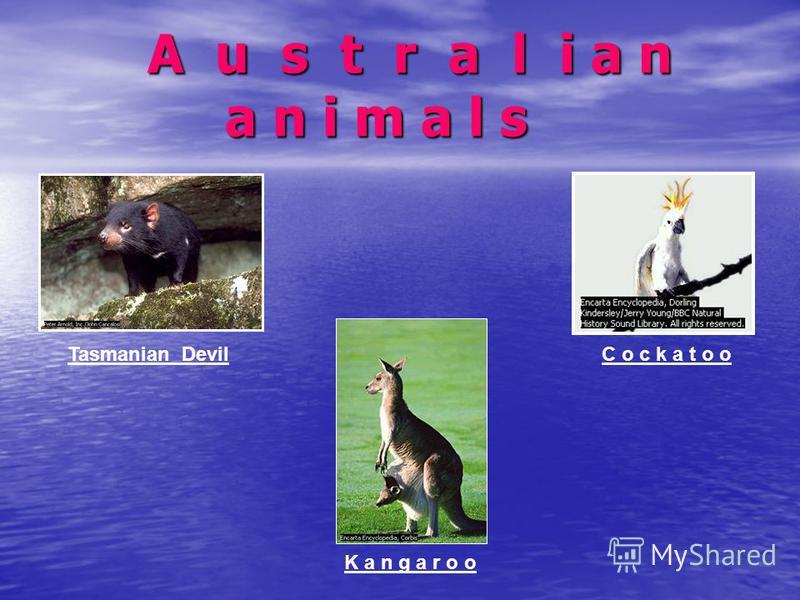 A u s t r a l i a n a n i m a l s A u s t r a l i a n a n i m a l s C o c k a t o o Tasmanian Devil K a n g a r o o