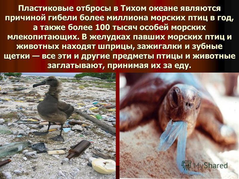Пластиковые отбросы в Тихом океане являются причиной гибели более миллиона морских птиц в год, а также более 100 тысяч особей морских млекопитающих. В желудках павших морских птиц и животных находят шприцы, зажигалки и зубные щетки все эти и другие п