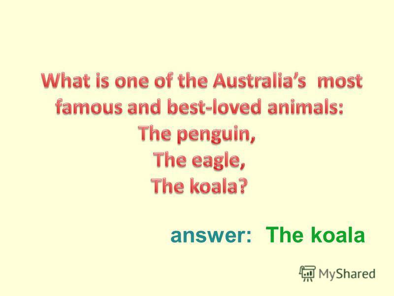 answer:The koala