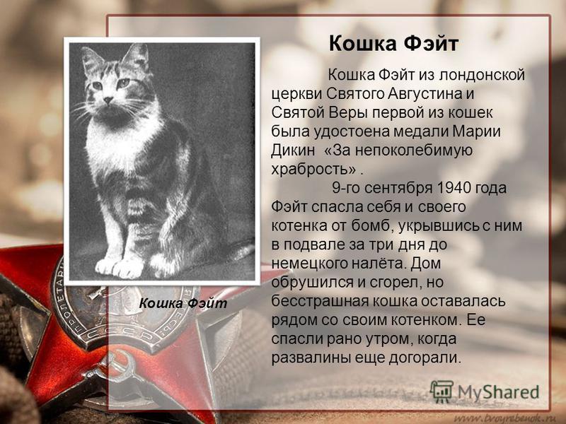 Кошка Фэйт Кошка Фэйт из лондонской церкви Святого Августина и Святой Веры первой из кошек была удостоена медали Марии Дикин «За непоколебимую храбрость». 9-го сентября 1940 года Фэйт спасла себя и своего котенка от бомб, укрывшись с ним в подвале за