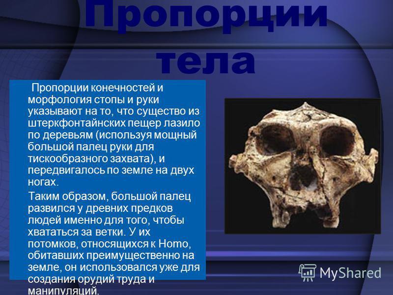 Предположительно для нападения и для защиты употребляли кости животных, палки, камни, возможно, что наиболее развитые виды умели их немного обрабатывать.