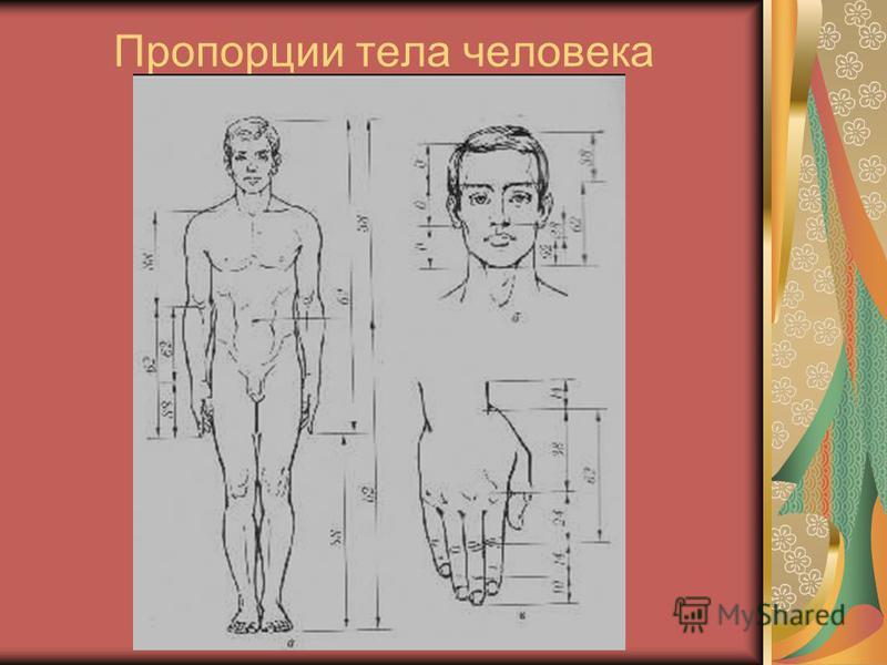 Пропорции тела человека