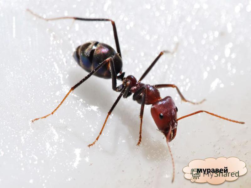 Кто же такие насекомые? Сейчас я посчитаю свои ножки! У всех насекомых шесть ног!