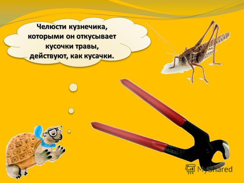Все насекомые питаются по-разному. Одни едят растения, другие – мельчайшую живность, третьи – и то, и другое. Некоторые питаются кровью.