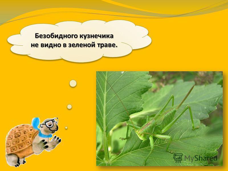 Как вы думаете, почему кузнечик зелёный, а шмель - пёстрый?