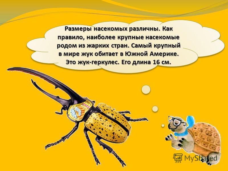 По количеству видов насекомые – самая богатая группа животных в мире. Они составляют 70 – 75 % всех видов животных, населяющих Землю.