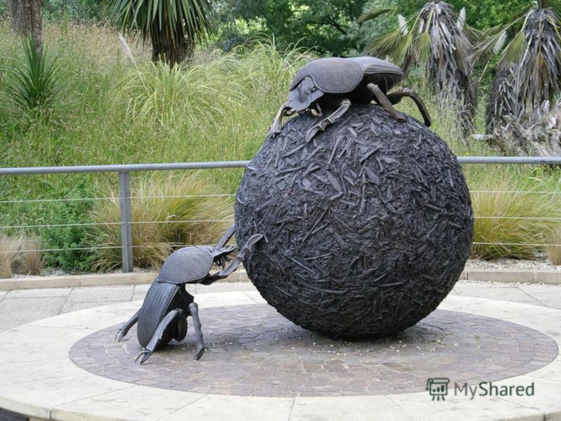 Муравей способен тащить ношу, которая весит в 52 раза больше его собственного веса, жук- носорог – в 100 раз, а жук- навозник тянет груз в 4210 раз больше, чем весит сам.