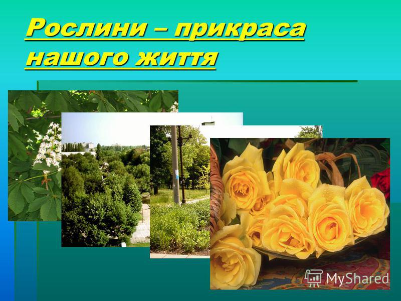 Рослини – прикраса нашого життя