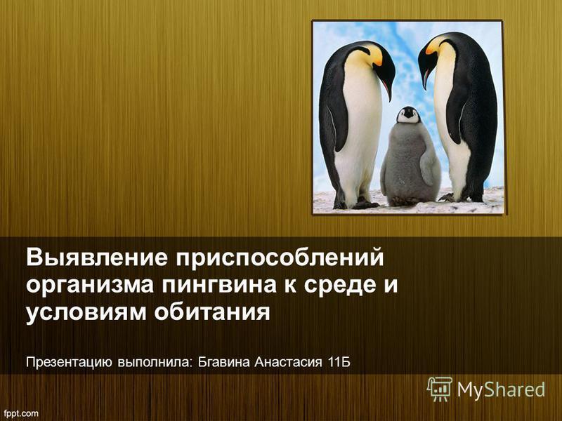 Выявление приспособлений организма пингвина к среде и условиям обитания Презентацию выполнила: Бгавина Анастасия 11Б