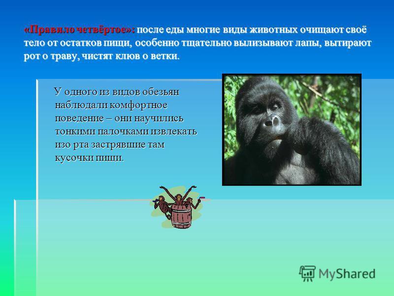 «Правило четвёртое»: после еды многие виды животных очищают своё тело от остатков пищи, особенно тщательно вылизывают лапы, вытирают рот о траву, чистят клюв о ветки. У одного из видов обезьян наблюдали комфортное поведение – они научились тонкими па