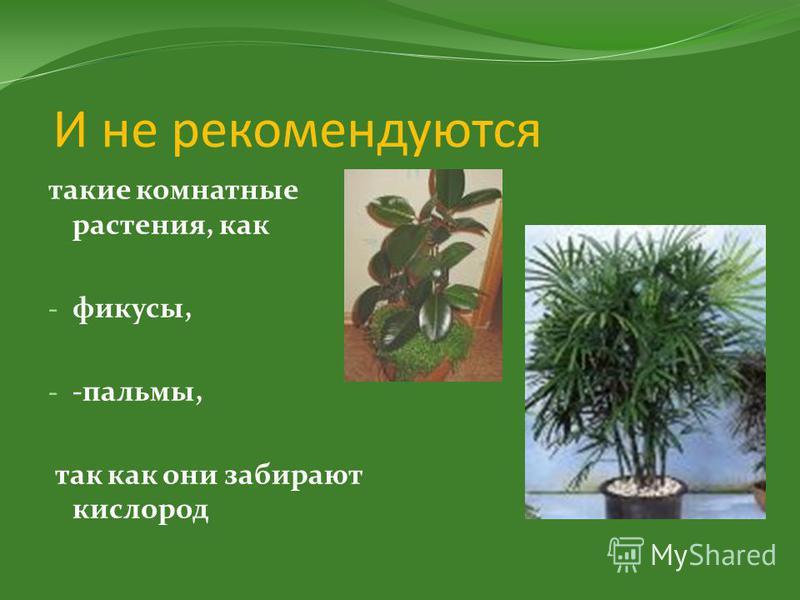 И не рекомендуются такие комнатные растения, как - фикусы, - -пальмы, так как они забирают кислород