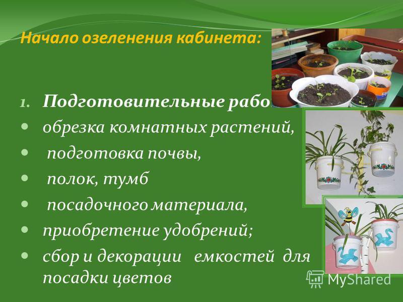 Начало озеленения кабинета: 1. Подготовительные работы: обрезка комнатных растений, подготовка почвы, полок, тумб посадочного материала, приобретение удобрений; сбор и декорации емкостей для посадки цветов