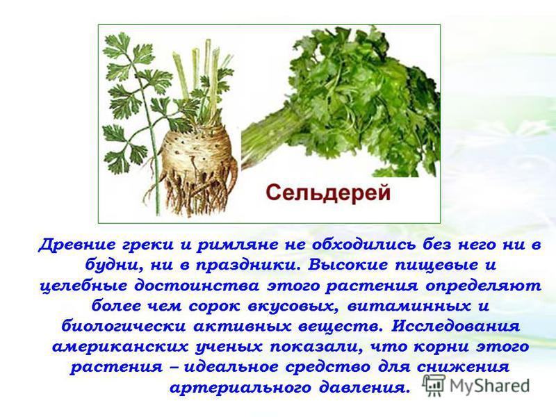 Древние греки и римляне не обходились без него ни в будни, ни в праздники. Высокие пищевые и целебные достоинства этого растения определяют более чем сорок вкусовых, витаминных и биологически активных веществ. Исследования американских ученых показал