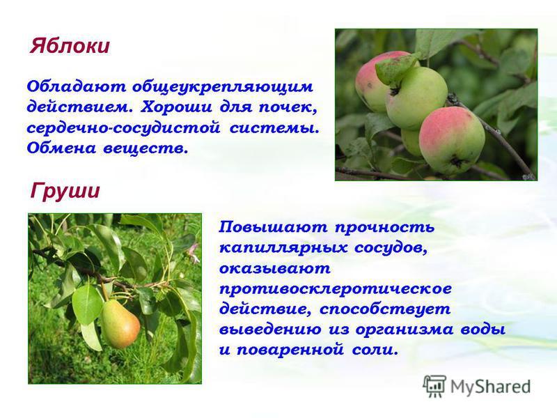 Яблоки Обладают общеукрепляющим действием. Хороши для почек, сердечно-сосудистой системы. Обмена веществ. Груши Повышают прочность капиллярных сосудов, оказывают противосклеротическое действие, способствует выведению из организма воды и поваренной со