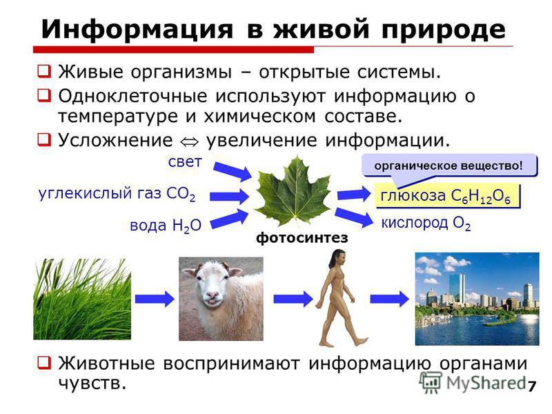 7 Информация в живой природе Живые организмы – открытые системы. Одноклеточные используют информацию о температуре и химическом составе. Усложнение увеличение информации. Животные воспринимают информацию органами чувств. фотосинтез глюкоза C 6 H 12 O