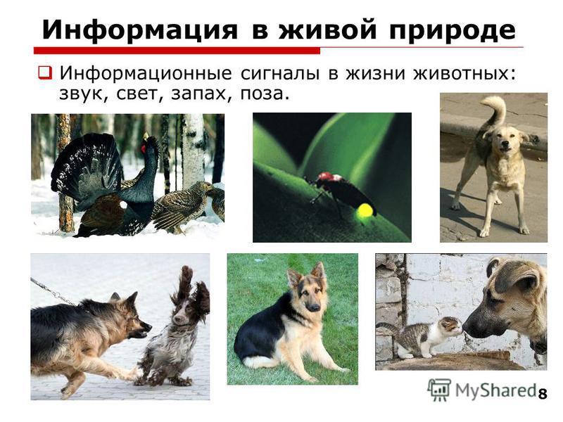 8 Информация в живой природе Информационные сигналы в жизни животных: звук, свет, запах, поза.