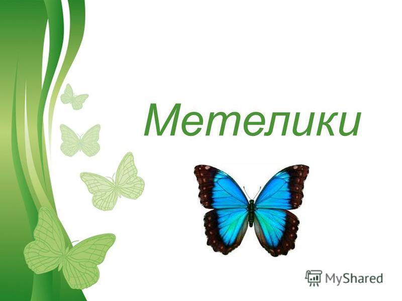 Free Powerpoint TemplatesPage 1Free Powerpoint Templates Метелики