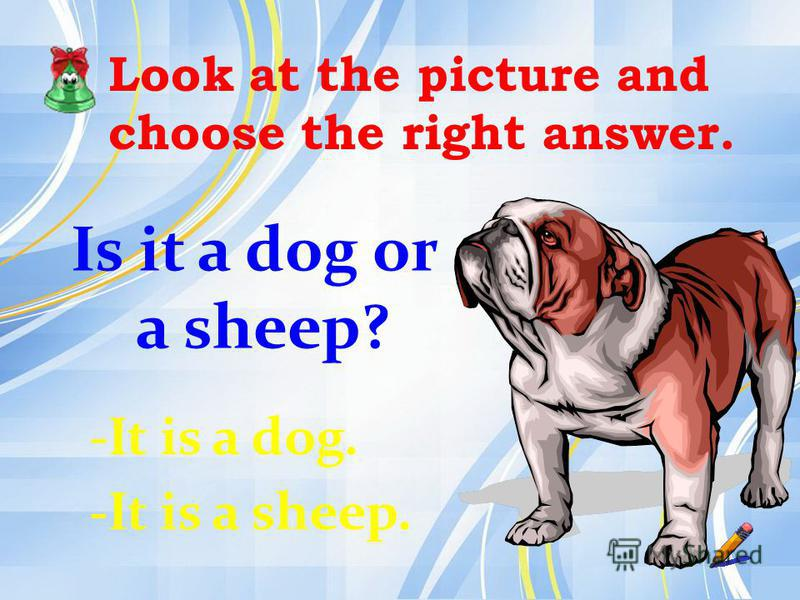 Look at the picture and choose the right answer. Is it a dog or a sheep? -It is a dog. -It is a sheep.