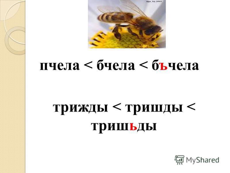 пчела < пчела < бъчела трижды < трижды < тришьды