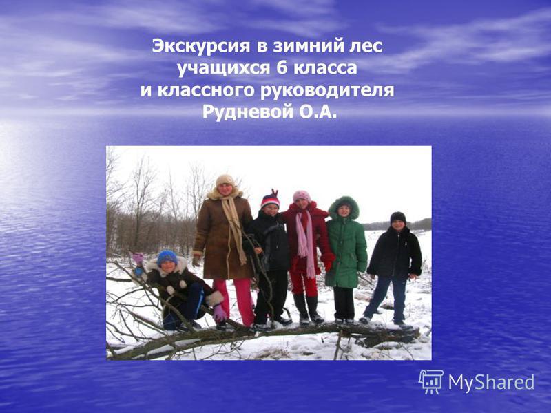 Экскурсия в зимний лес учащихся 6 класса и классного руководителя Рудневой О.А.